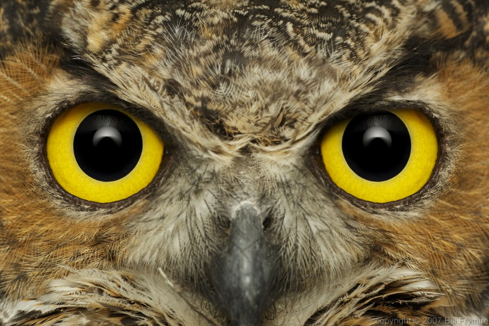 owl's eye - meddic Owl Eye Inclusion