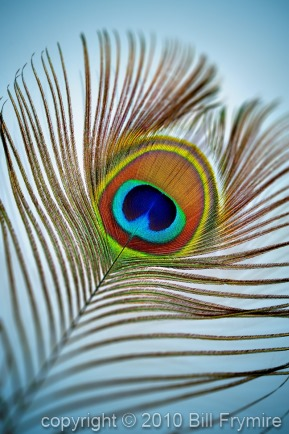 peacock-feather-colorful-light
