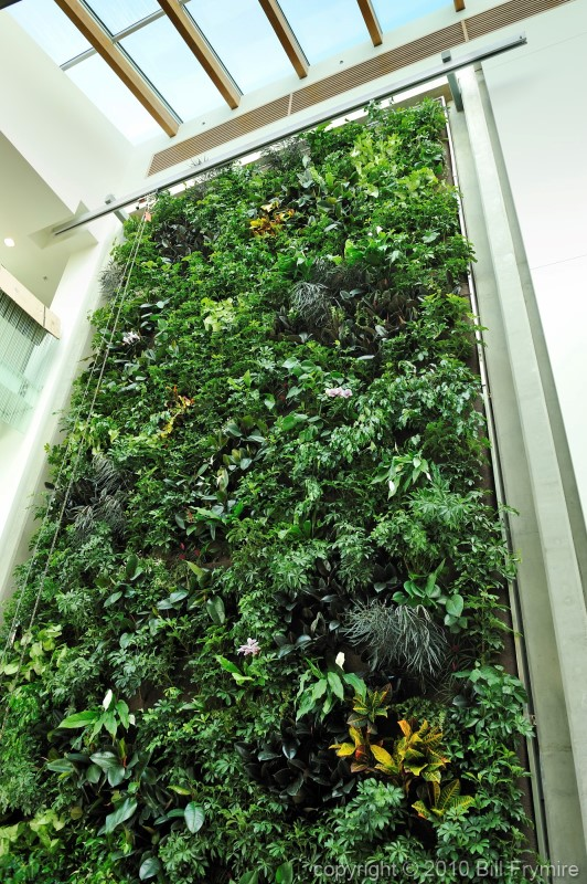 Green solutions image of the week bill frymirebill for Living plant walls