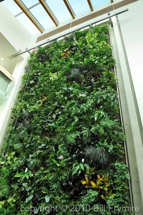 living-wall-plant-air-pure-below-434.jpg