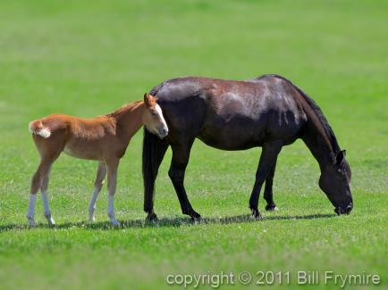mother-mare-foal-horse-pasture-434
