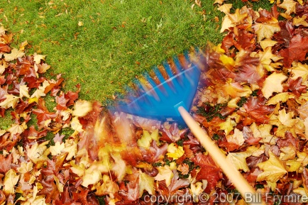 rake-leaves-speed-434