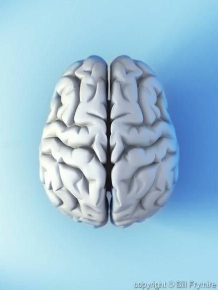 the human brain as grey matter