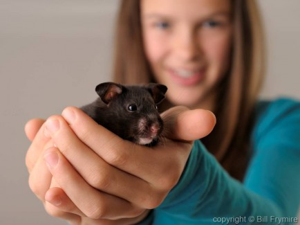 young girl holding a pet hamster