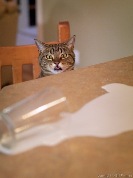 a cat licking its lips looking at some spilt milk on counter