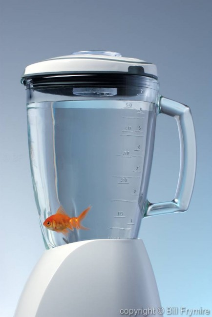 Goldfish in a blender