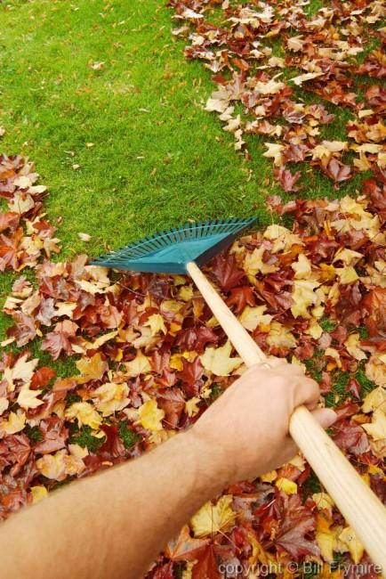 rake-leaves-hand