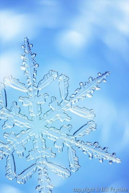 Snowflake copyright Bill Frymire Mar, 2004
