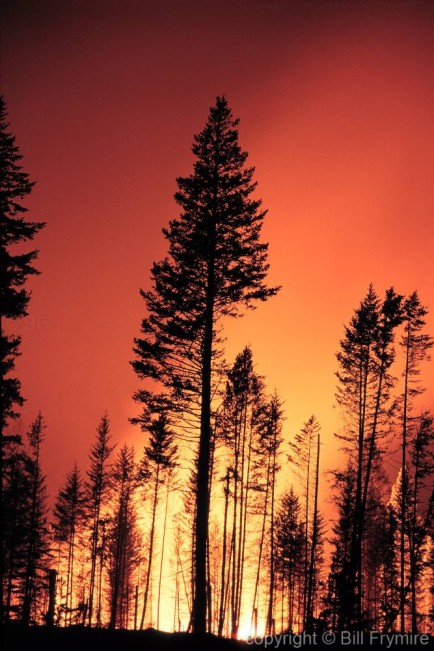 forest-fire-trees-burning