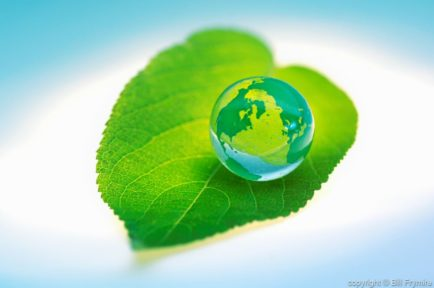 marble globe on green leaf