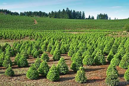 christmas-tree-farm Beadboard Cost