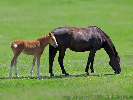 Mother Horse And Foal Mother And Foal Horse