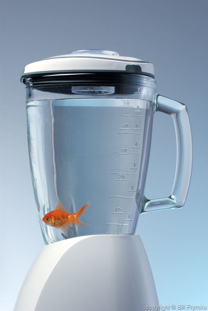fish in a blender