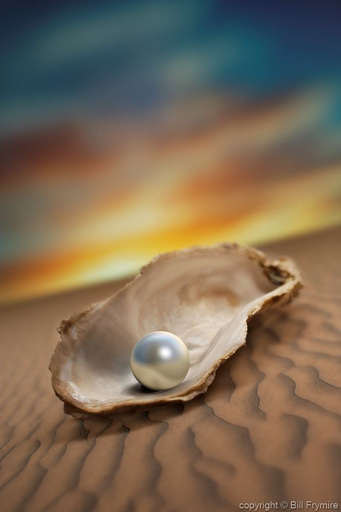Pearl Oyster Shell | www.pixshark.com - Images Galleries ...