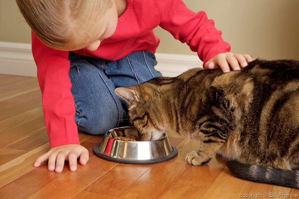 Что делать когда кормящая кошка просит кота